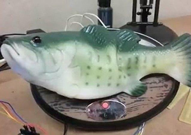 Wideo: Amerykanin zmusił rybę do mówienia