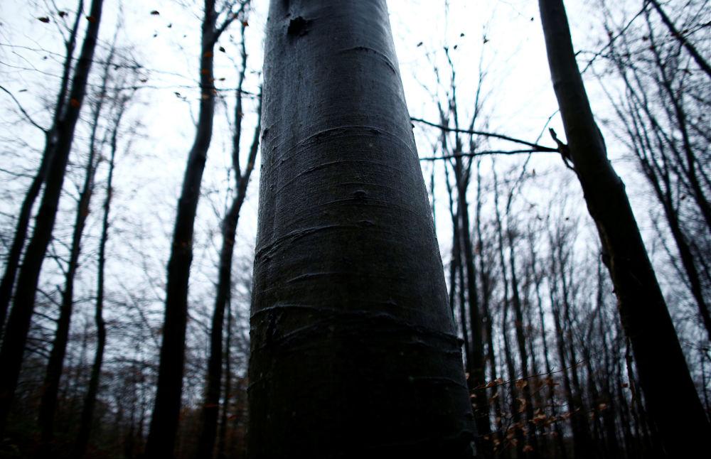 Drzewa w bieszczadzkim lesie w Polsce