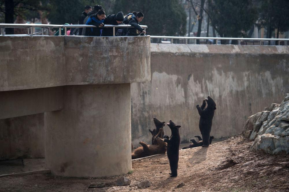 Dzieci karmią niedźwiedzie w centralnym zoo Pjongjangu