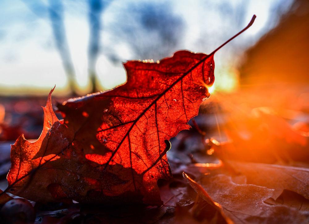 Promienie słońca przebijające przez jesienny liść
