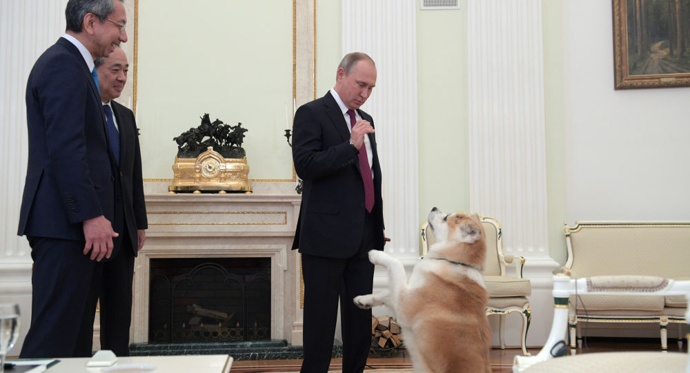 """Prezydent Rosji Władimir Putin z psem Yume przed wywiadem na Kremlu dla stacji telewizyjnej """"Nippon"""" i gazety Yomiuri w przeddzień oficjalnej wizyty w Japonii"""