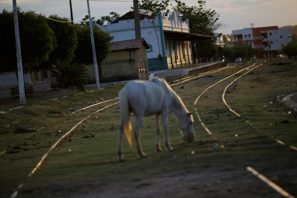 Koń przy dawnej stacji kolejowej miasta Missao Velha w Brazylii