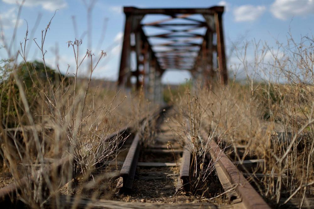 Dzikie rośliny na torze niedokończonej kolei Transnordestina do przejazdu wagonów towarowych