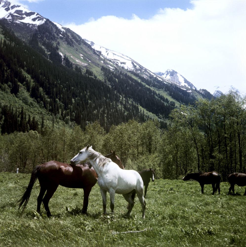 Teberdyński Państwowy Rezerwat Biosfery jest jednym z unikalnych szczególnie chronionych terenów przyrodniczych na Kaukazie Północnym.