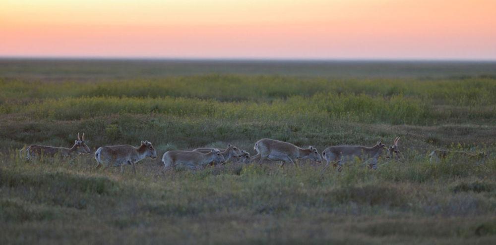 Rezerwat Biosfery Czarne Ziemie jest jedynym w Rosji poligonem do badania krajobrazów stepowych, półpustynnych i pustynnych a także kałmuckiej populacji suhaka stepowego.