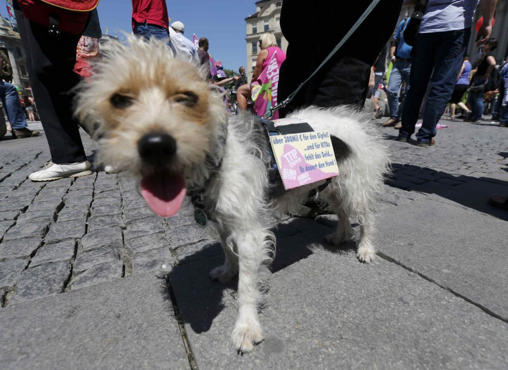 Właściciel i jego pies podczas demonstracji w Monachium