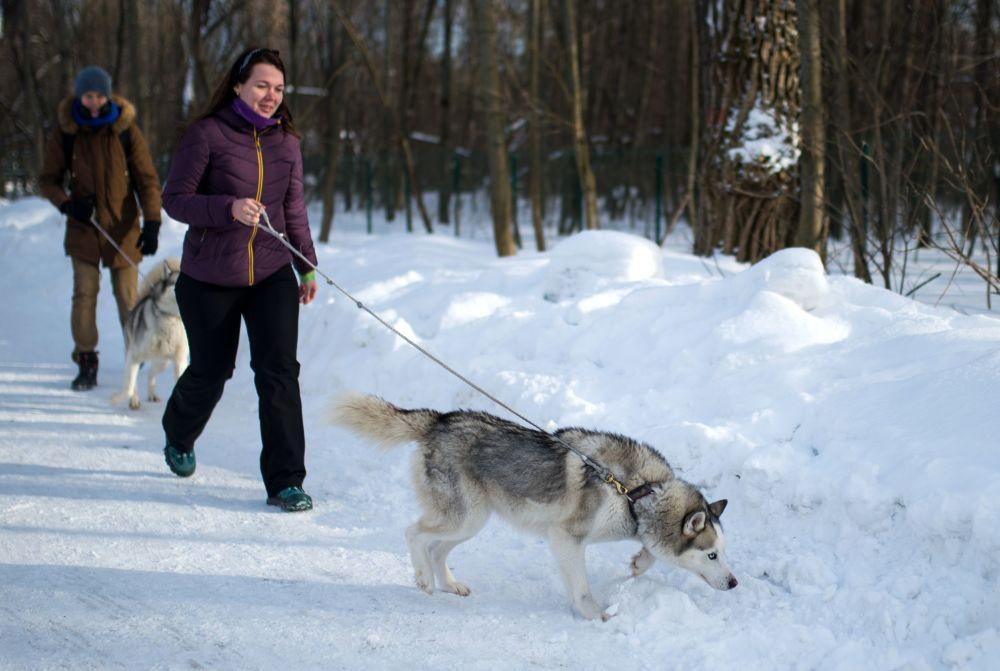 Dziewczyny w moskiewskim parku Sokolniki spacerują z psami rasy husky