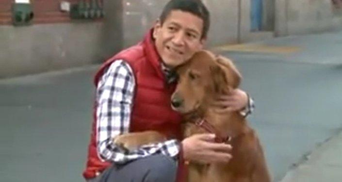 Słodki pies przytulak
