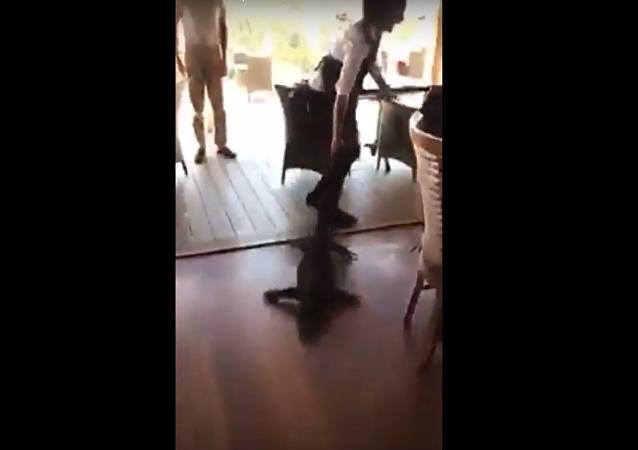 Kelnerka uratowała klientów przed smokiem
