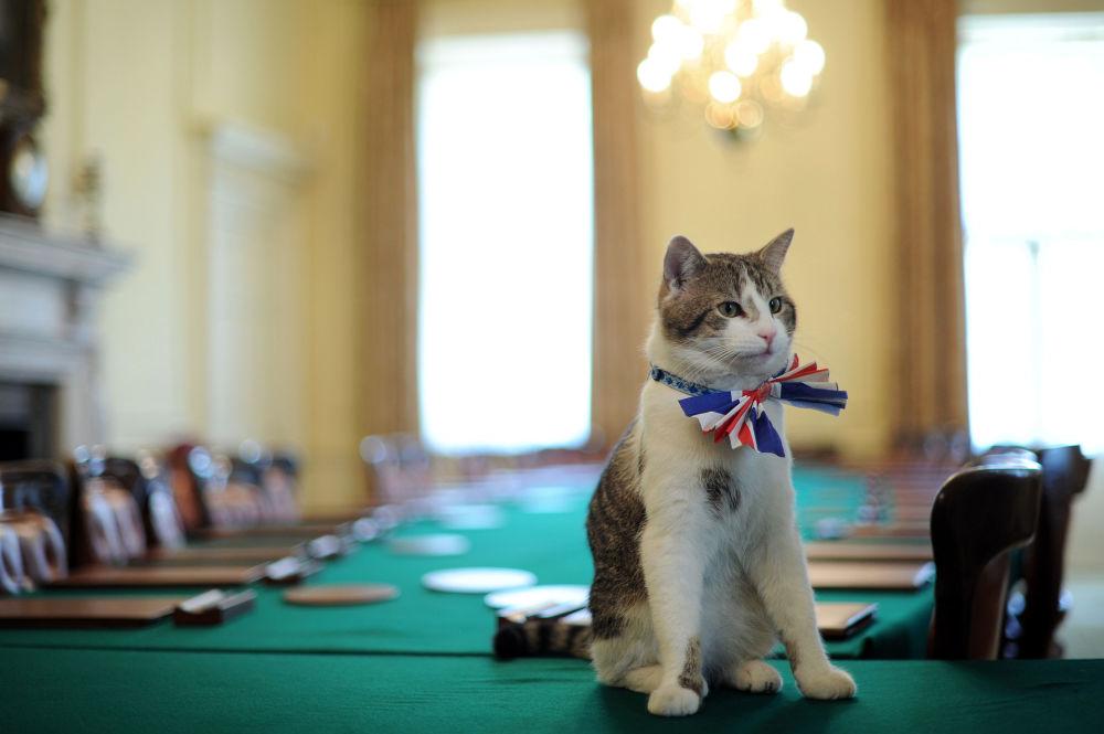 Kot Larry od lutego 2011 roku pełni obowiązki głównego łapacza myszy w rezydencji brytyjskiego rządu. Rodzina Davida Camerona wzięła 4-miesięczne kocię ze schroniska. Pomimo dymisji Camerona kot nadal mieszka w rezydencji rządu.