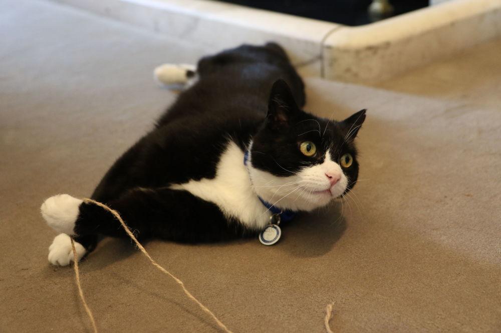 Kot Palmerston od kwietnia 2016 roku pełni obowiązki głównego łapacza myszy w brytyjskim Ministerstwie Spraw Zagranicznych. Palmerston rywalizuje z Larry'm z rezydencji brytyjskich premierów. Koty były wielokrotnie przyłapywane podczas bójki.