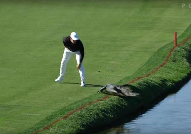 Amerykański golfista podczas turnieju zepchnął aligatora do stawu