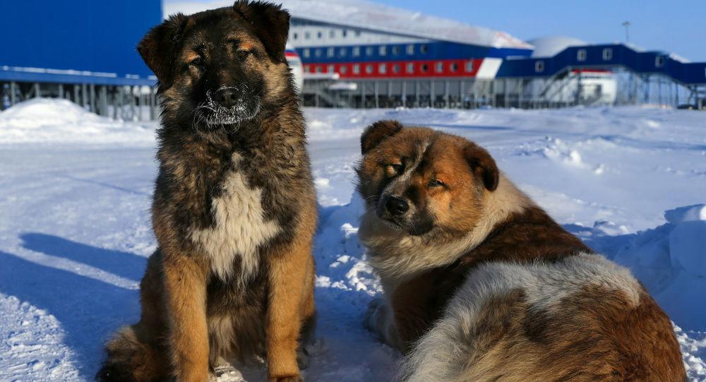 Rosyjska baza w Arktyce