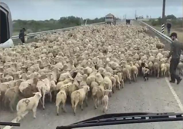 Coś takiego może się przytrafić tylko w Dagestanie!
