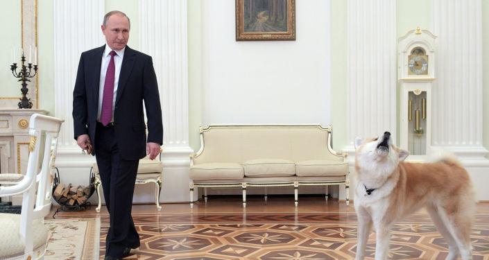 Prezydent Rosji Władimir Putin z psem