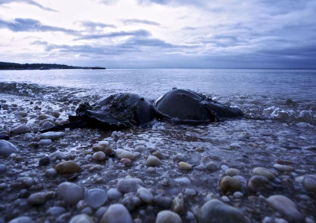 Plaża w Oyster Bay w stanie Nowy Jork