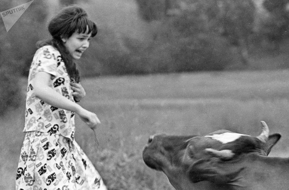 Dziewczyna ucieka od krowy