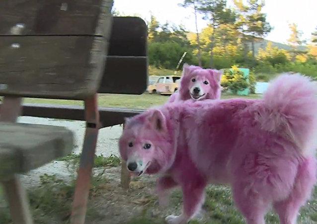 Różowe psy z Gelendżyka