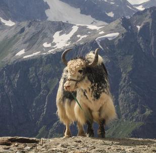 Dombaj to rejon kurortowy położony w Karaczajo-Czerkiesji, u podnóży Głównego Grzbietu Kaukaskiego.