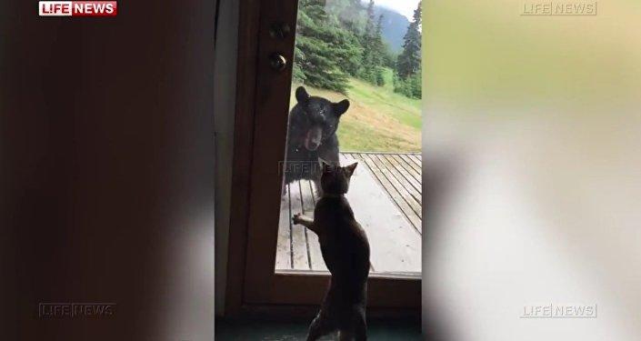 Kot wystraszył niedźwiedzia