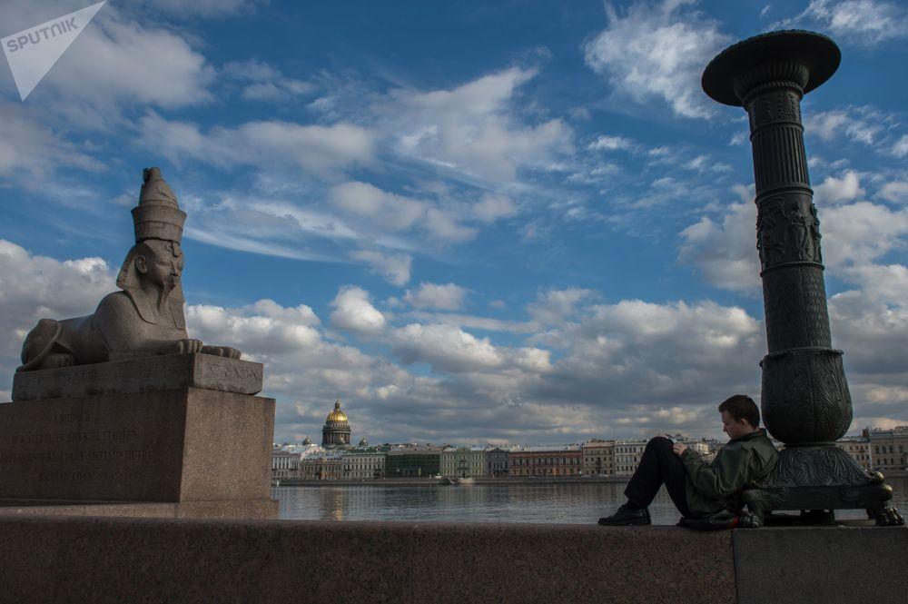 Sfinks na nabrzeżu Uniwersyteckim w Petersburgu
