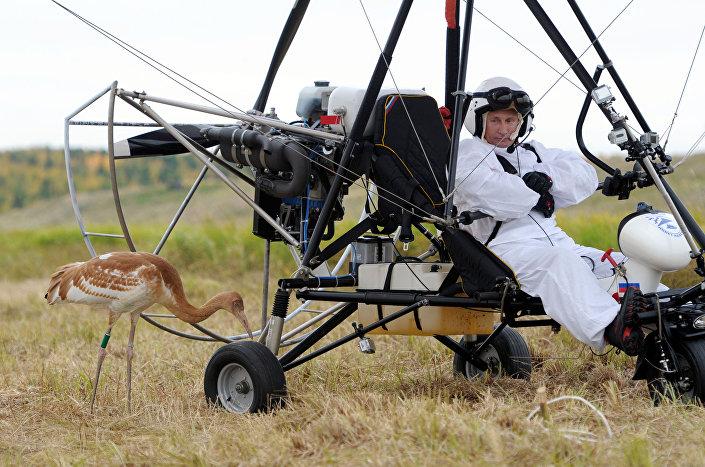 Władimir Putin bierze udział w ekologicznym projekcie Lot nadziei, 05.09.2012 r.