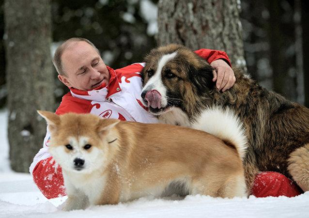 Spacer Władimira Putina z psami w obwodzie moskiewskim.