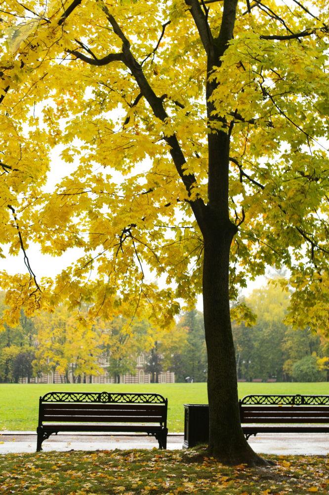 Jesień w parku Carycyno w Moskwie