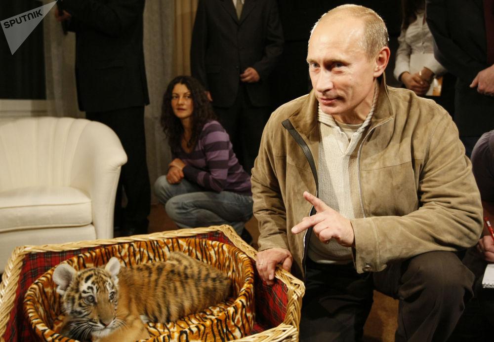 Władimir Putin pokazał dziennikarzom tygrysa, którego podarowano prezydentowi na urodziny