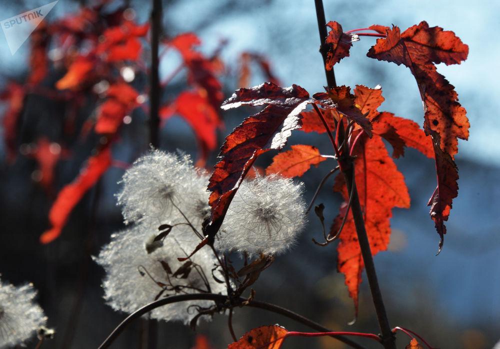 Jesień w Kraju Nadmorskim