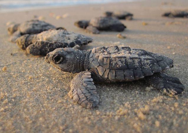Żółwie morskie