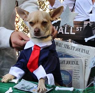 Psie Halloween w Nowym Jorku