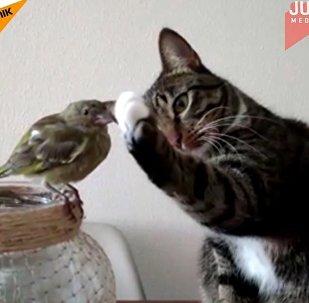 kot i papuga