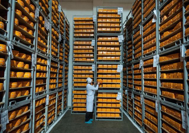 Krążki sera na składze w obwodzie czernichowskim Ukrainy