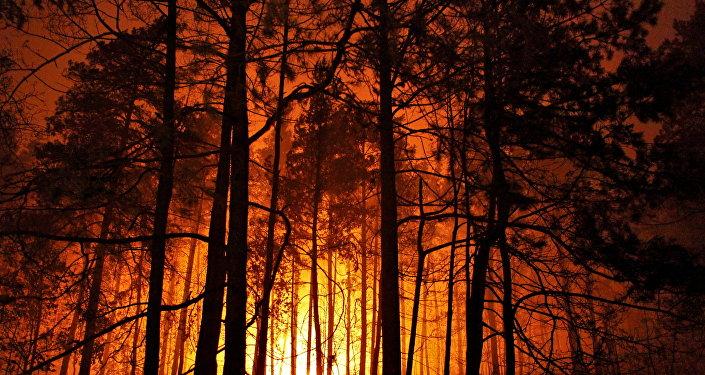 Pożary w podmoskiewskich lasach