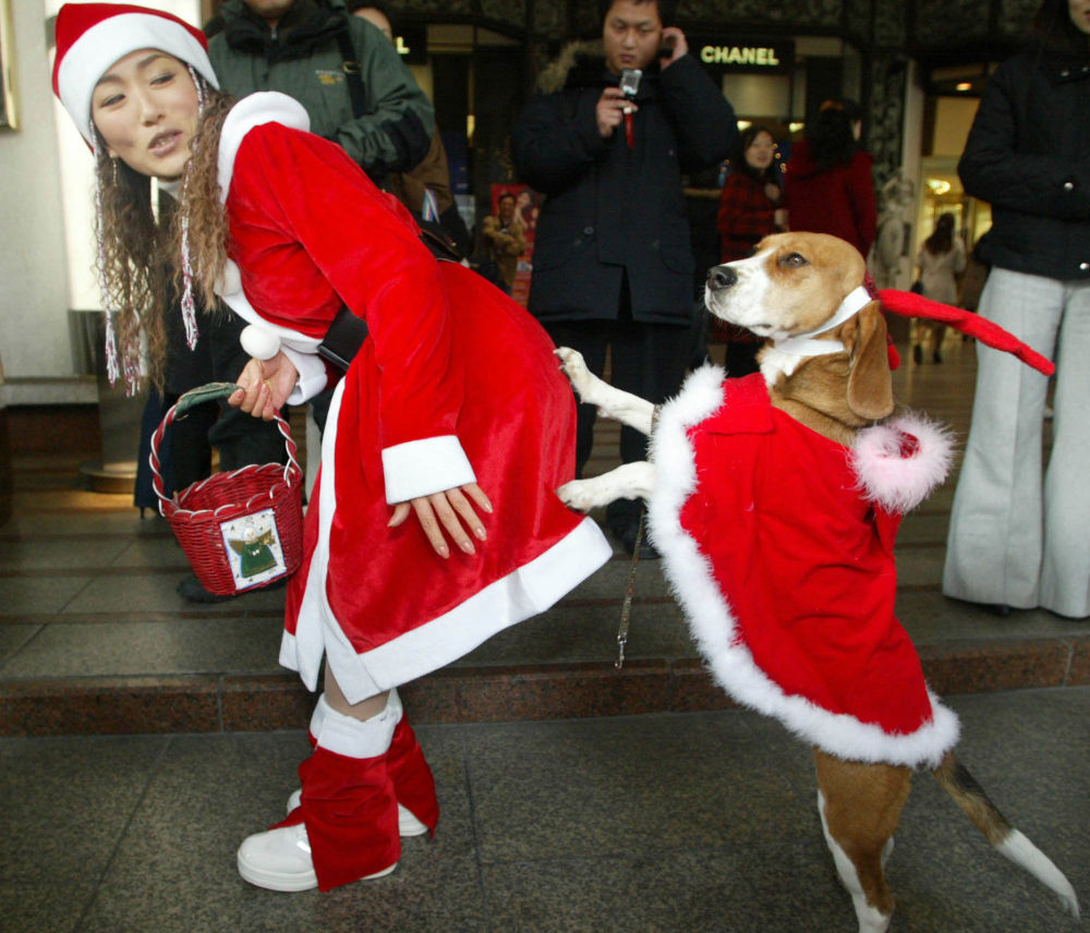 Dziewczyna z psem w kostiumach Świętego Mikołaja, Seul