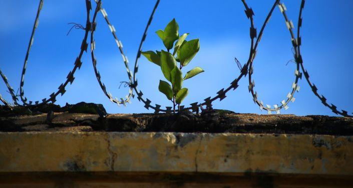 """W Danii otwarto """"najbardziej humanitarne"""" więzienie na świecie"""