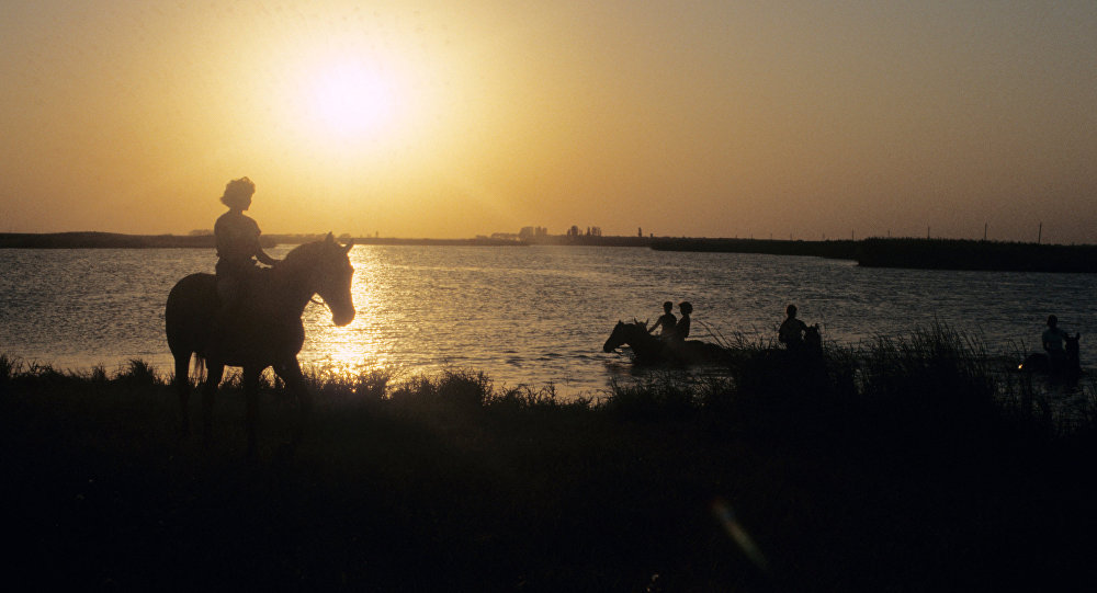 Kąpiel koni, Kubań Rosja