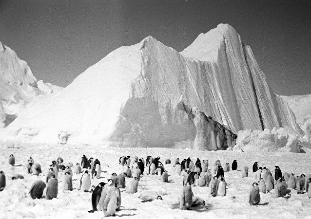 Pierwsze spotkanie pingwinów z Antarktydy z radziecką ekspedycją