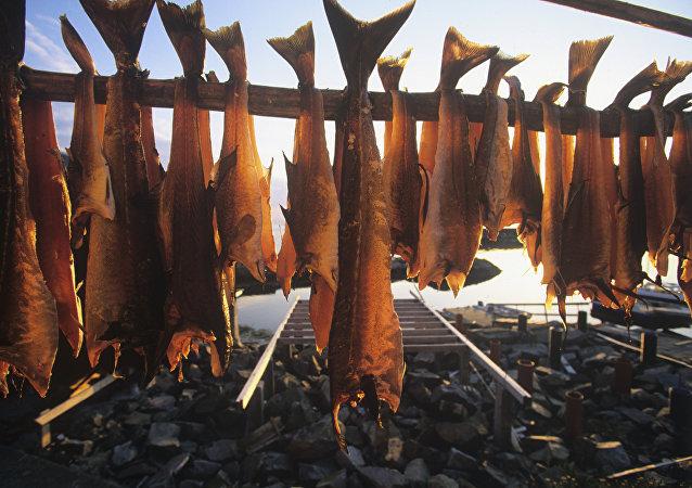 Suszenie ryb w Norwegii