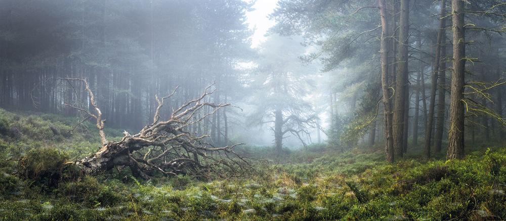 Zwycięzcą konkursu w kategorii Światło na Ziemi została praca North Yorkshire fotografa z Wielkiej Brytanii Simona Baxtera.