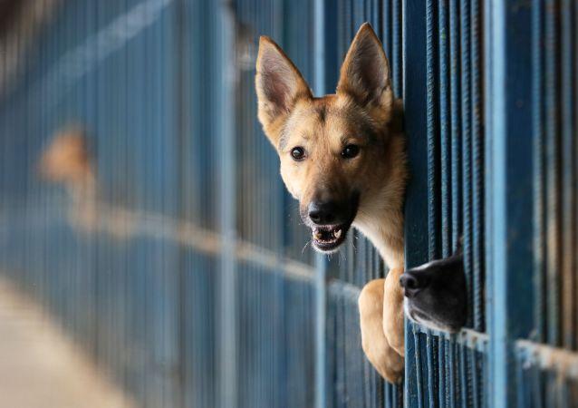 Schronisko dla bezdomnych psów