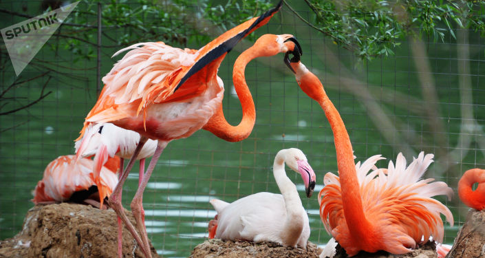 Flamingi w moskiewskim ZOO