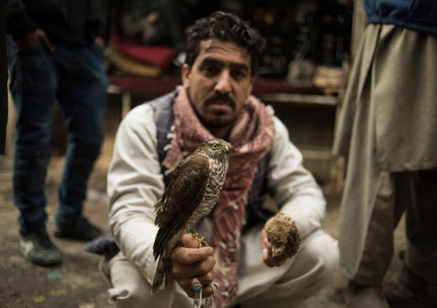 Sprzedawca ptaków, Kabul