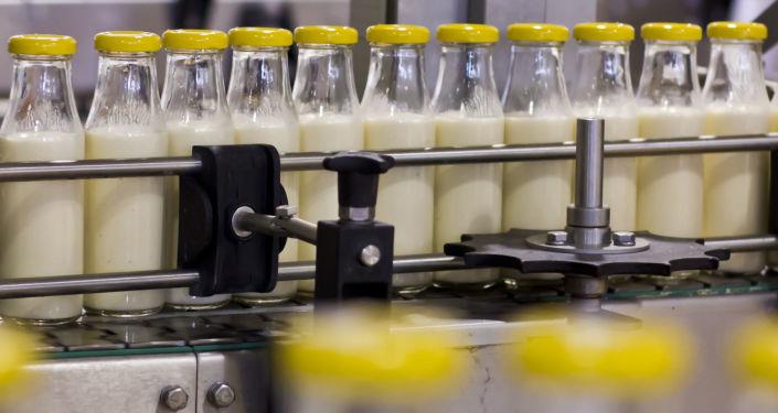 Taśma do produkcji mleka