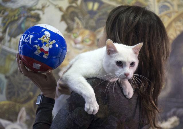 Ermitaż w Petersburgu, kot Achilles i gadżet MŚ 2018