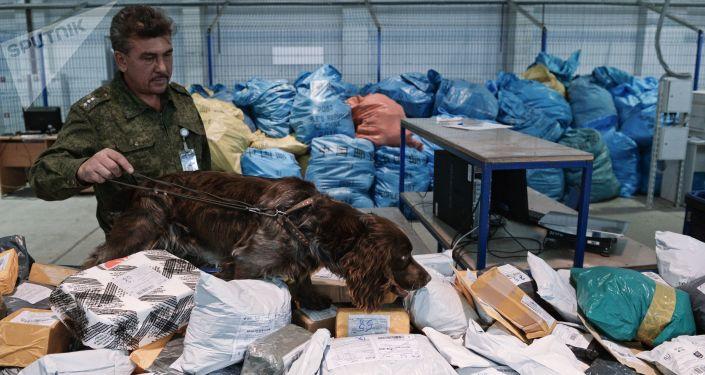 Pracownik rosyjskiej służby celnej z psem sprawdza przesyłki na obecność narkotyków