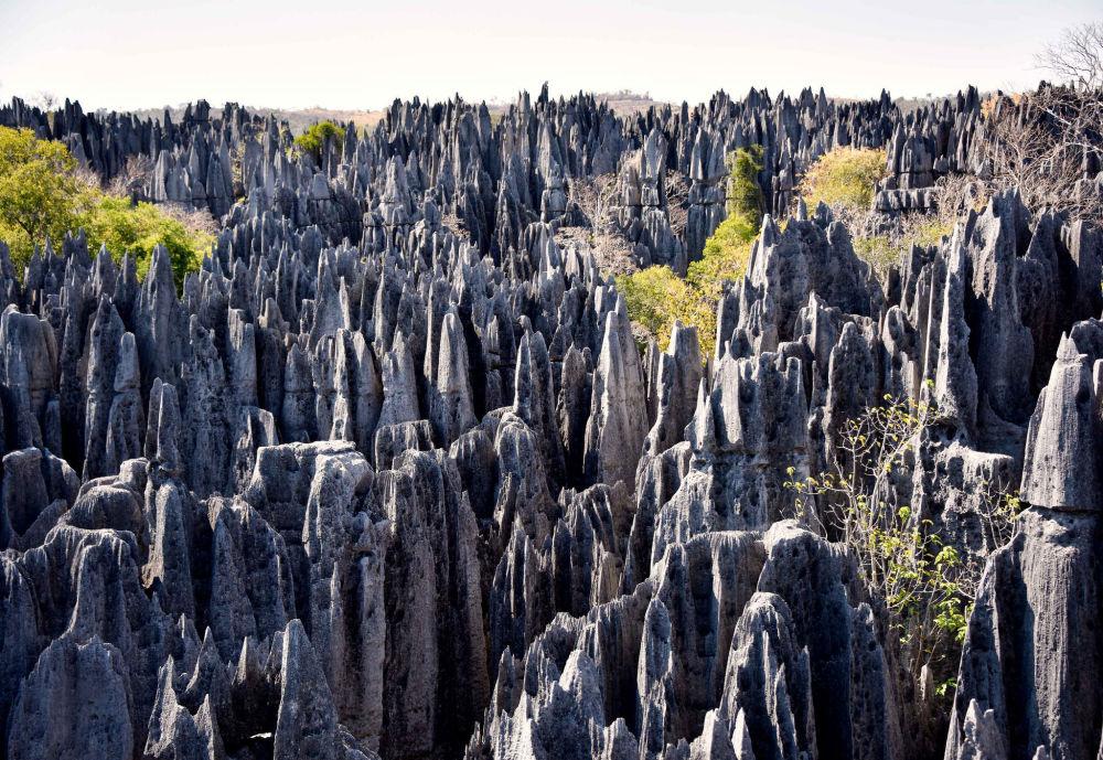 Las w Madagaskarze