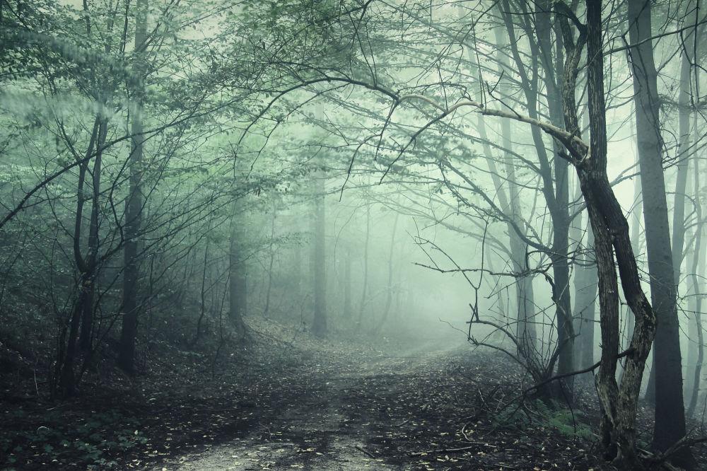 Las w Transylwanii