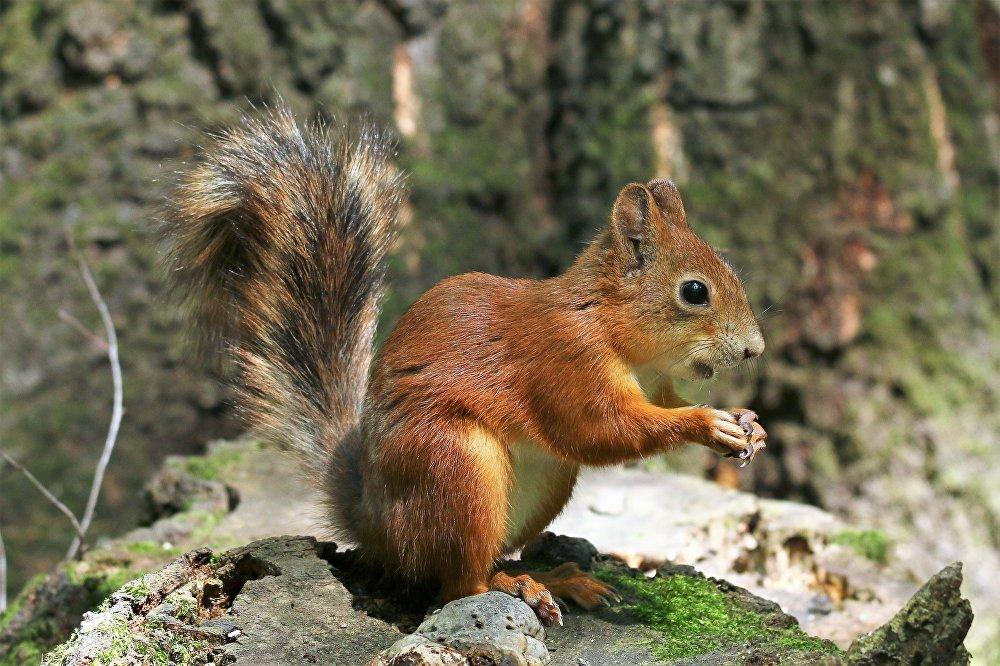 Moskiewska wiewiórka w letniej odsłonie